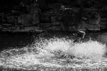 【上手な写真撮影術】初心者でも簡単!ミラーレスでインパクトのある写真を撮る方法